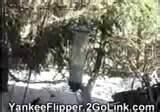 pictures of Yankee Flipper Bird Feeder