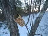 Peanut Bird Feeder photos