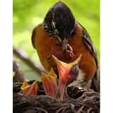 pictures of What To Feed A Baby Bird