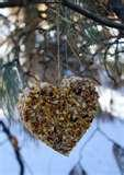 Homemade Bird Feeder Plans pictures