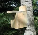 pictures of Plans For Bird Feeders