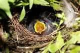 photos of What To Feed A Baby Bird