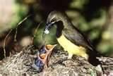 images of What To Feed A Baby Bird