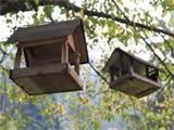 photos of Wooden Bird Feeder Plans
