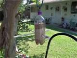 Water Bottle Bird Feeder Pictures