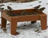 Ground Bird Feeders photos