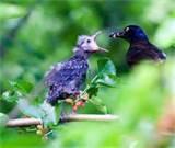 Bird Feeding Baby images