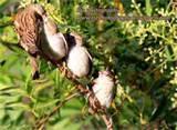 Bird Feeding Baby pictures