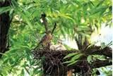 pictures of Bird Feeding Baby