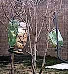 photos of Pop Bottle Bird Feeder
