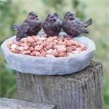 Bird Bath And Feeder photos