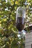 images of Bottle Bird Feeders