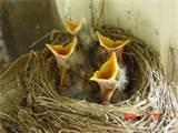 What To Feed Baby Birds Photos
