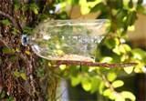 Pictures of Diy Bird Feeder