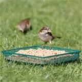 Ground Bird Feeder Images