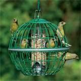 Bird Seed Feeder Photos