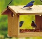 Blue Bird Feeders