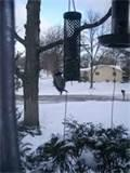 Photos of Bird Seed Feeder