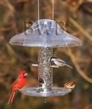 Pictures of Cardinal Bird Feeder