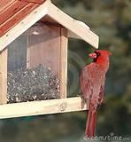 Photos of Cardinal Bird Feeder