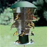 Large Bird Feeders Pictures