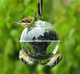 Bird Feeders Homemade Pictures