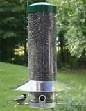 Large Bird Feeders