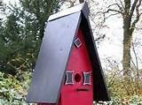 House Bird Feeder Photos
