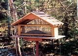 Build Bird Feeders Images