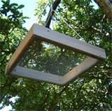 Images of Bird Feeder Tray