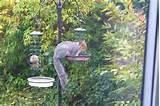 Squirrel Proof Bird Feeder Pictures