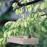 Bird Feeder Tray Photos