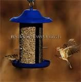 Blue Bird Feeder Photos