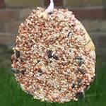 Bird Feeder Tray Images