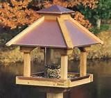 Images of Build Bird Feeders