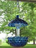 Blue Bird Feeder Pictures