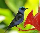 Images of Blue Bird Feeder