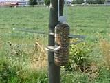 Photos of Easy To Make Bird Feeders