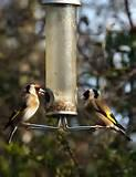 Pictures of Bird Feeder Stand