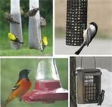 Types Of Bird Feeders Images