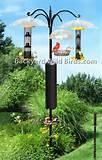 Bird Feeder Pole Images