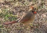 Photos of Bird Feeders For Cardinals