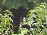 Bird Feeder Camera Photos