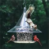 Bird Feeder Squirrel Photos
