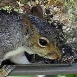 Photos of Squirrel Bird Feeders