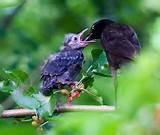 Pictures of Feeding Baby Bird