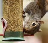 Images of Squirrel Bird Feeders
