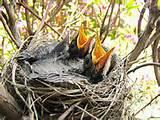 Feeding Baby Bird Images