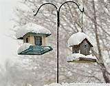 Free Bird Feeders Pictures