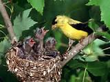 Images of Feeding A Baby Bird